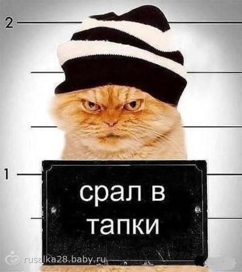 коты и тапки фото