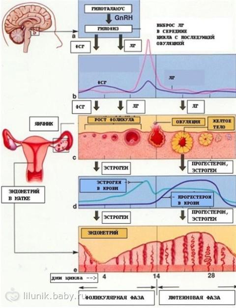 повышение гормона пролактина у дам как влияет на беременность