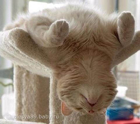 Кошачьи позы для сна для всех