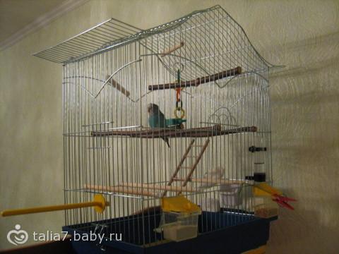 Как сделать вольер для попугая своими руками