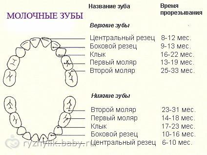 СХЕМА ПРОРЕЗЫВАНИЯ ЗУБОВ!
