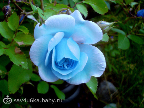 http://cs22.babysfera.ru/b/3/6/2/60990971.180731999.jpeg