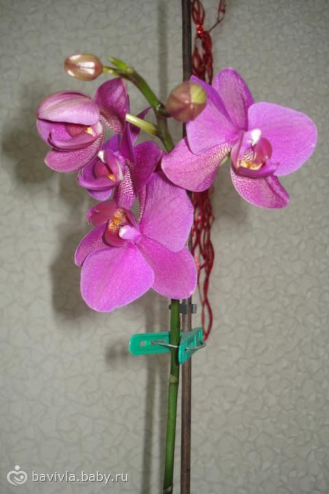 Орхидея скинула цветы что делать