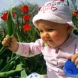 первые тюльпаны!!