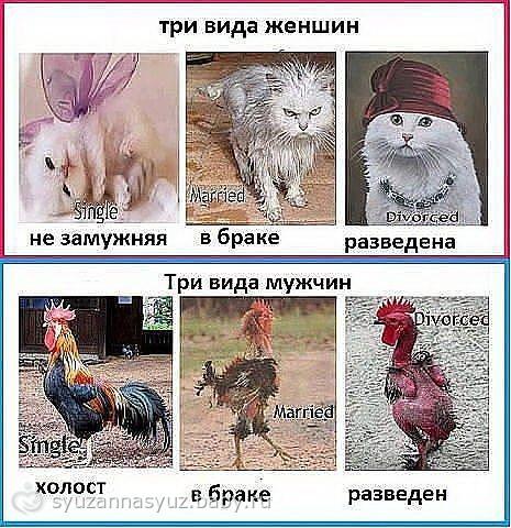 Немного смеха в добавку)))