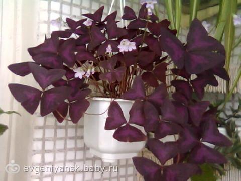 Цветы для домашнего благополучия