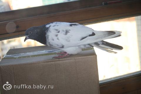 Птица залетела в дом! чего ждать?!, в дом залетела птица.