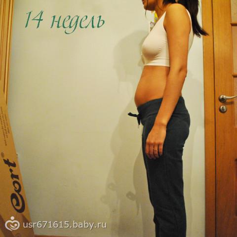 Как выглядит живот на 14 неделе беременности фото