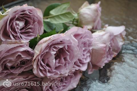 Коллаж. Мобиль и птицы для Элвина. Необычайные розы.