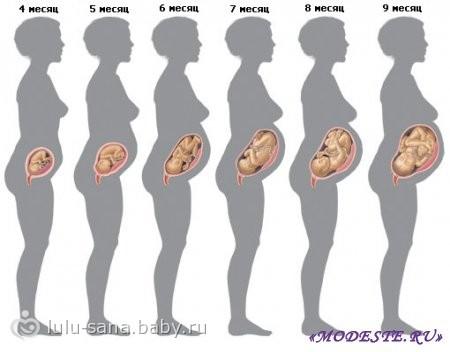 рост эмбриона по неделям фото