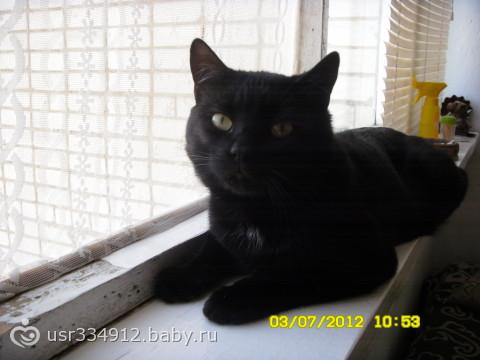 Можно ли заводить чёрных котов