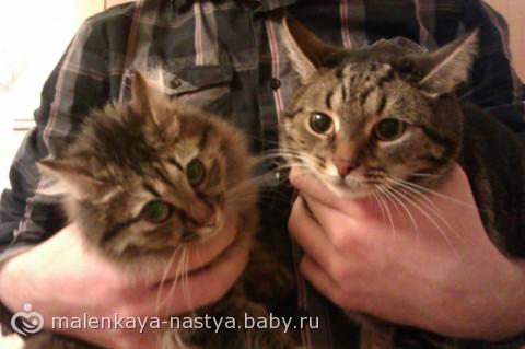 Ласковый кот в добрые руки!
