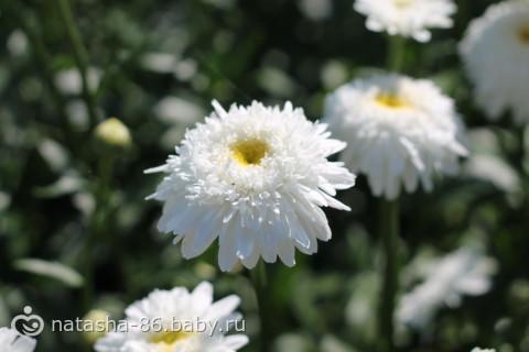 Цветы! Очень много цветов!