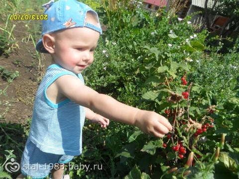 полакомимся ягодками!