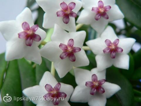 Цветок и название к-а по алфавиту 30